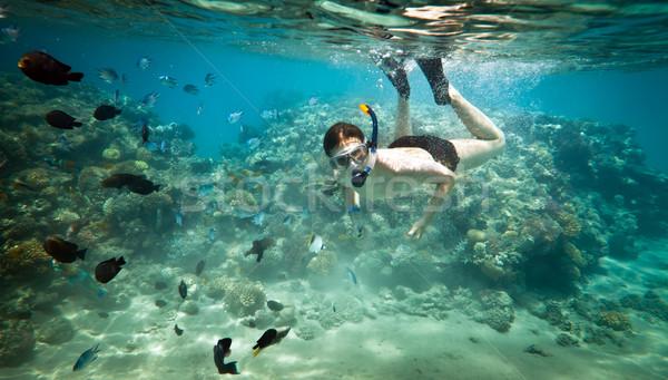 Vörös-tenger búvárkodik agy korall víz sport Stock fotó © cookelma