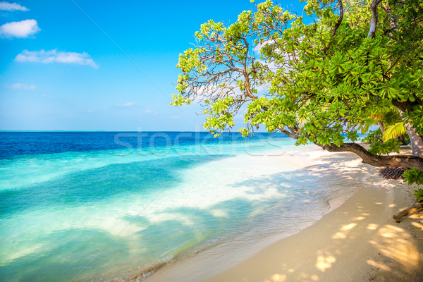 Maldives beach Stock photo © cookelma