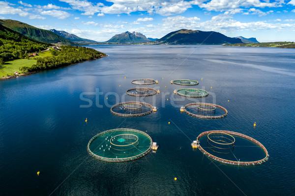 çiftlik somon balık tutma fotoğrafçılık Norveç Stok fotoğraf © cookelma