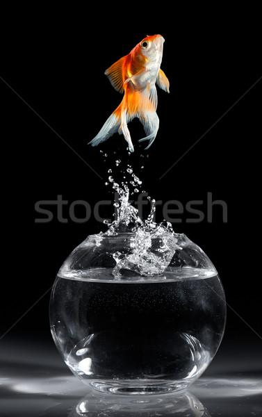 Aranyhal ugrás akvárium sötét hal hullám Stock fotó © cookelma