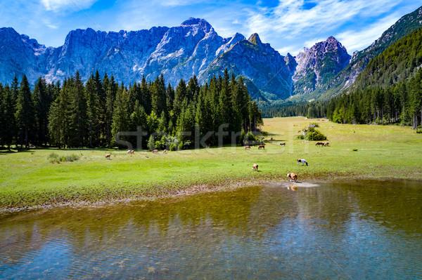 Horses graze on green field.Lake Lago di Fusine Superiore Italy  Stock photo © cookelma