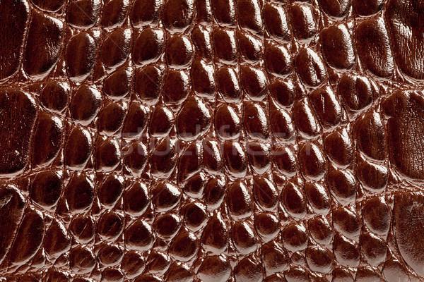 Krokodil bőr textúra bőr közelkép Stock fotó © cookelma
