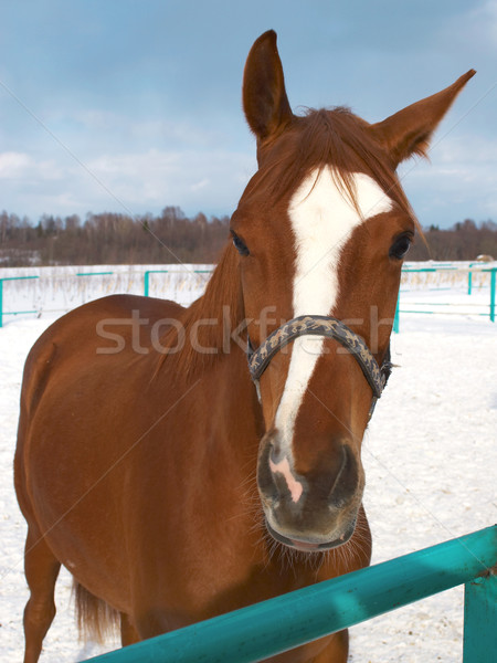 horses in a countryside. Stock photo © cookelma
