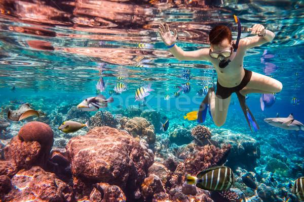 Maldive indian Ocean diving cervello Foto d'archivio © cookelma