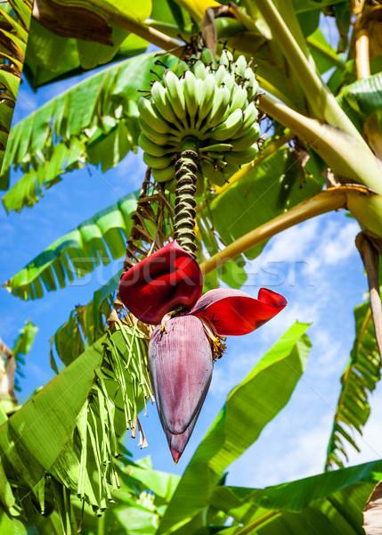 flori de banane