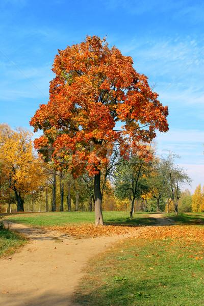 Foto stock: Otono · arce · cielo · árboles · rojo · parque