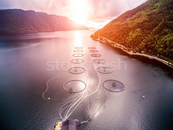 Gospodarstwa łososia połowów Norwegia antena fotografii Zdjęcia stock © cookelma