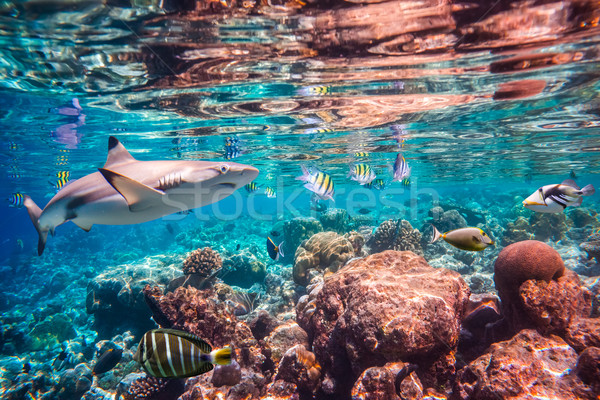 Tropicales variété soft poissons tropicaux Maldives Photo stock © cookelma