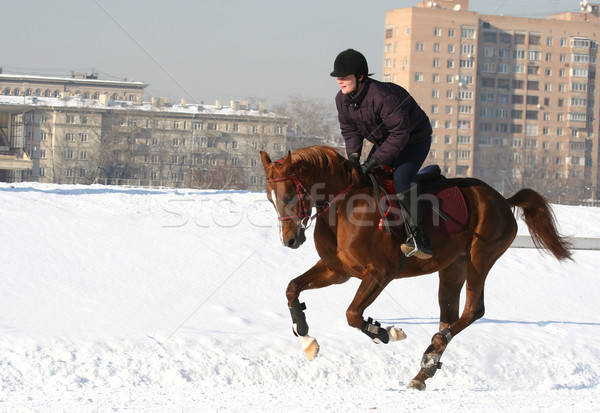 The girl the equestrian skips on a horse Stock photo © cookelma
