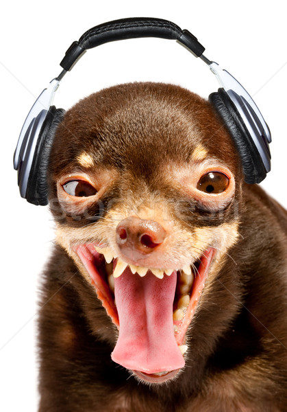 Ridiculous dog DJ. Stock photo © cookelma