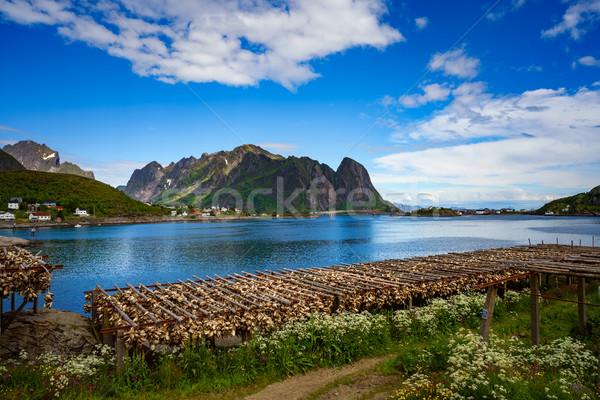 Vis eilanden zee schoonheid berg zomer Stockfoto © cookelma