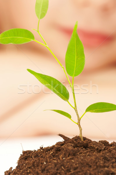 The boy observes cultivation of a young plant. Stock photo © cookelma