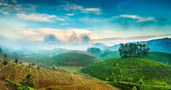 Tea plantations in India Stock photo © cookelma