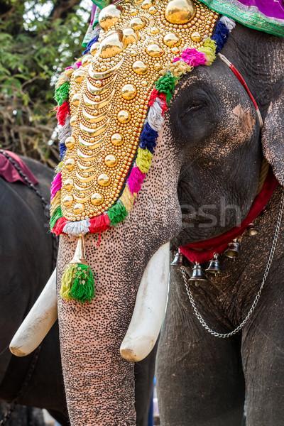 Hindistan fil festival dekore edilmiş tatil gökyüzü Stok fotoğraf © cookelma