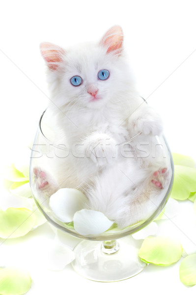 белый котенка стекла рюмку улыбка глаза Сток-фото © cookelma