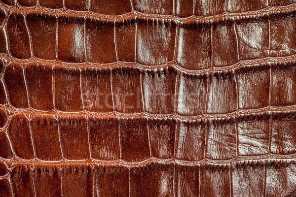 Krokodyla skóry tekstury moda charakter tle Zdjęcia stock © cookelma