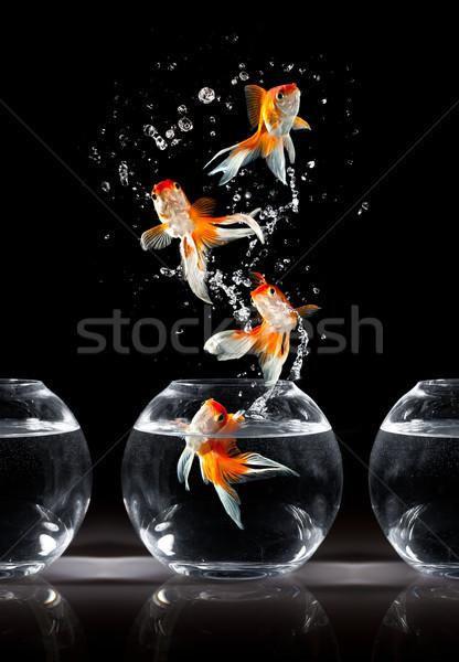 goldfishs jumps Stock photo © cookelma