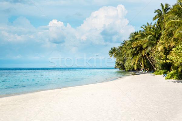 モルディブ ビーチ 熱帯 ツリー 自然 風景 ストックフォト © cookelma