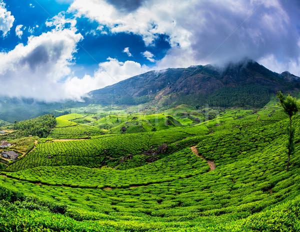 Stok fotoğraf: çay · Hindistan · manzara · bahar · ahşap · orman