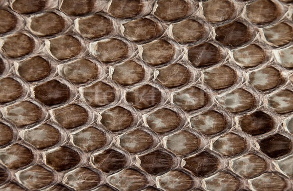 Snake skin. Stock photo © cookelma