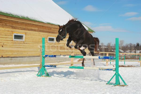 Jumping horse Stock photo © cookelma