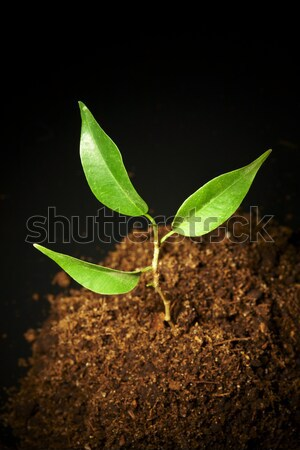 Stock photo: Young sprout on a black background