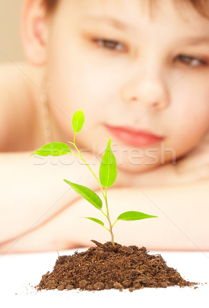 Jongen jonge plant boom kind blad Stockfoto © cookelma