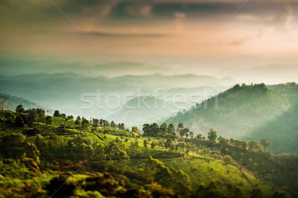 Herbaty Indie przesunąć obiektyw krajobraz wiosną Zdjęcia stock © cookelma