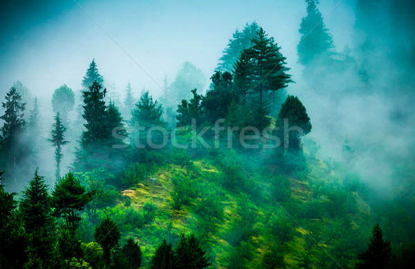 Stock photo: fog