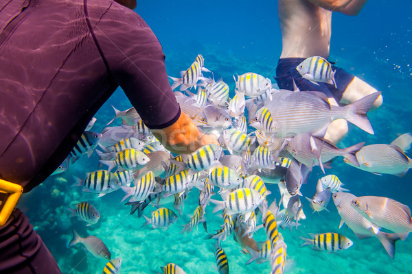Tropical Coral Reef.Man feeds the tropical fish. Stock photo © cookelma