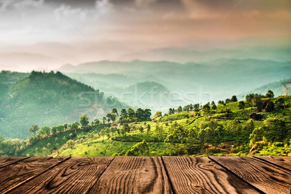 Tea plantations in India (tilt shift lens) Stock photo © cookelma