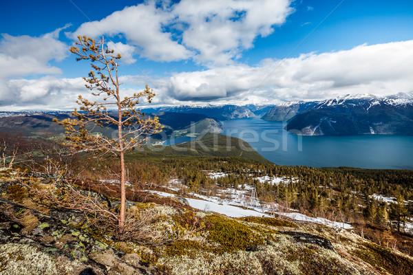 Beautiful Nature Norway - Sognefjorden. Stock photo © cookelma