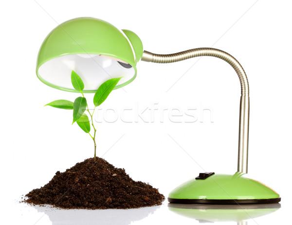 小さな 芽 表 ランプ 白 自然 ストックフォト © cookelma