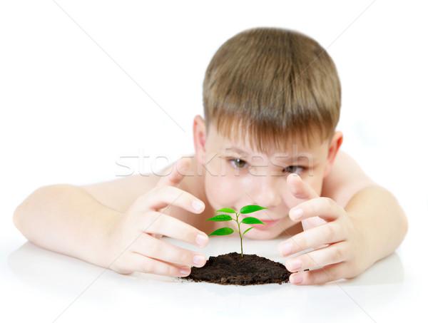 Foto stock: Nino · jóvenes · planta · árbol · nino · hoja