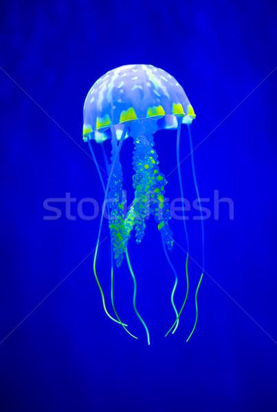 Igazi meduza kék úszik vízalatti trópusi Stock fotó © cookelma