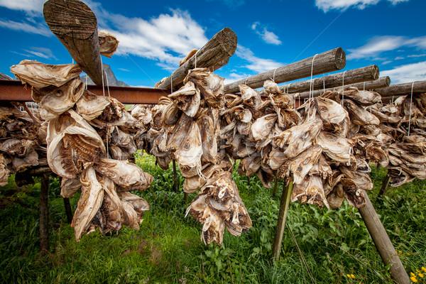 Fish heads drying on racks Stock photo © cookelma