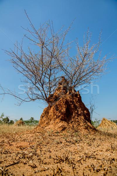 Bush groeiend mier heuvel Stockfoto © cookelma