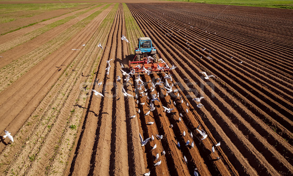 Agricultural work on a tractor farmer sows grain. Hungry birds a Stock photo © cookelma