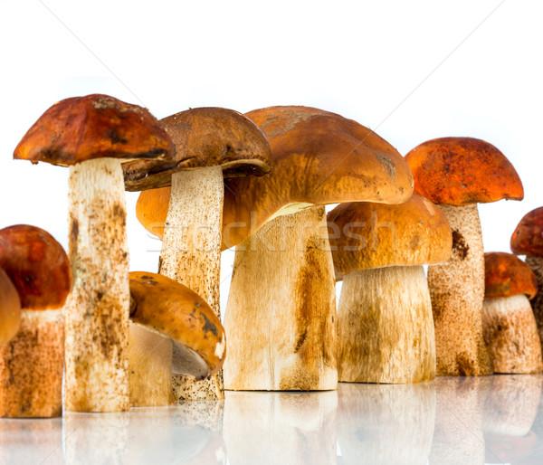 ストックフォト: ヤマドリタケ属の食菌 · ポルチーニ · 白 · 食品 · 自然 · 食べ