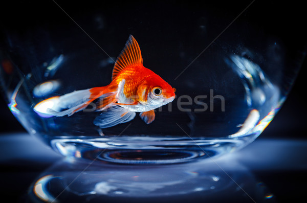 Stock photo: Goldfish