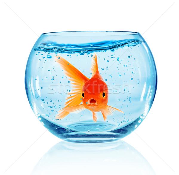 Goldfish аквариум изолированный белый природы жизни Сток-фото © cookelma