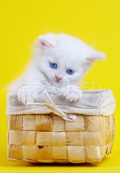 白 子猫 バスケット 笑顔 眼 自然 ストックフォト © cookelma