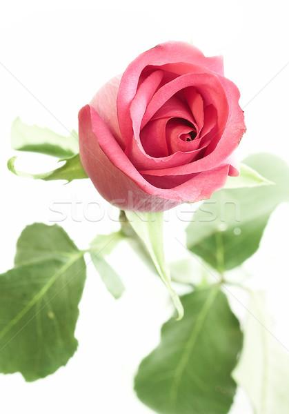 Bianco fiori amore compleanno rosso Foto d'archivio © cookelma