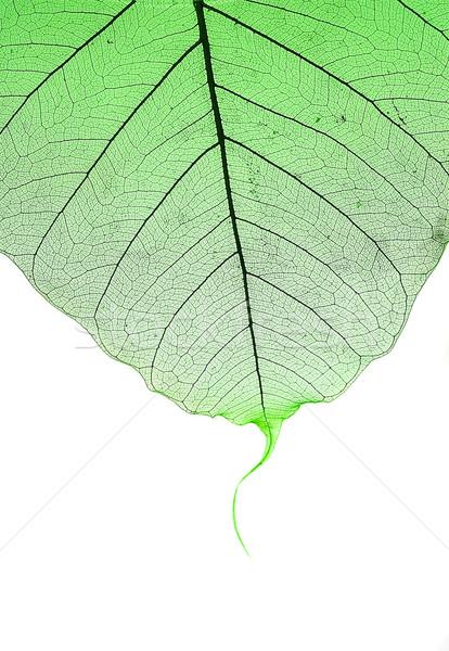 Green leaf  Stock photo © cookelma