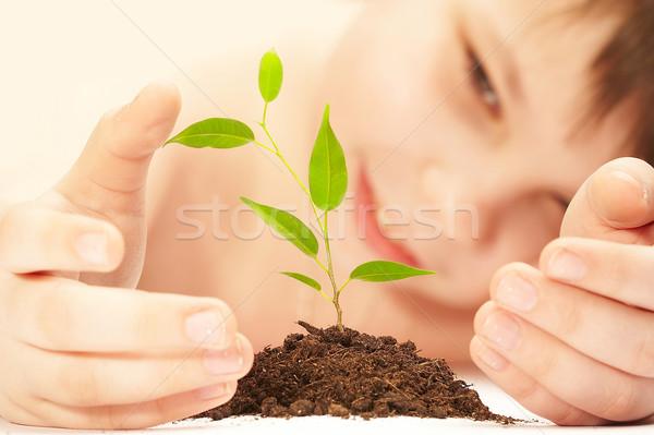 Fiú fiatal növény fa gyermek levél Stock fotó © cookelma