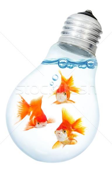 золото небольшой рыбы свет дизайна Сток-фото © cookelma