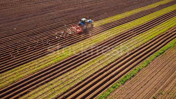 Agrícola trabalhar trator jeans grão faminto Foto stock © cookelma