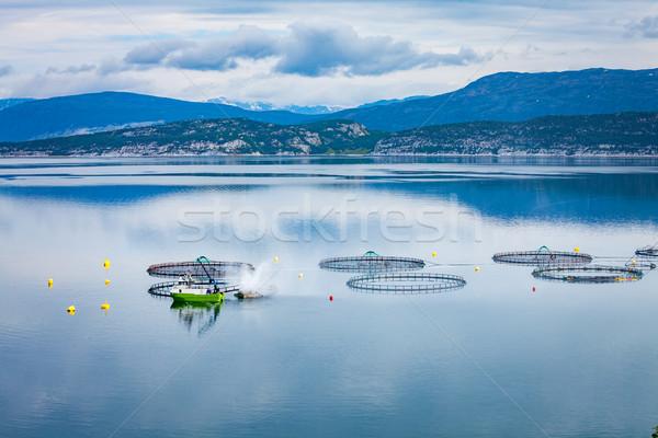 Boerderij zalm vissen Noorwegen voedsel zee Stockfoto © cookelma