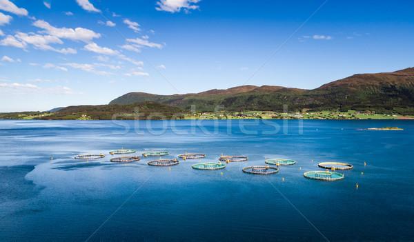 ファーム 鮭 釣り 写真 海 ストックフォト © cookelma