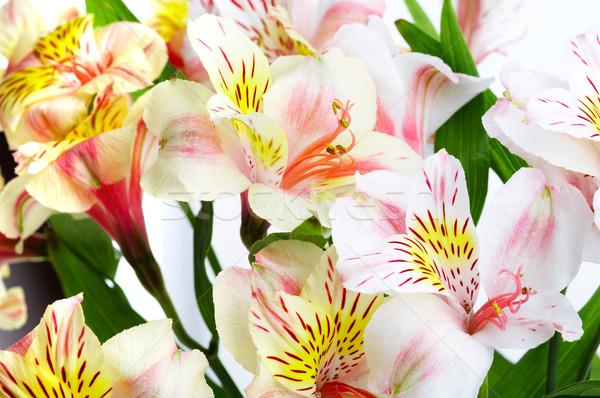 Orchidea fotó fehér közelkép virág tavasz Stock fotó © cookelma